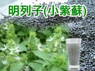 明列子(小紫蘇)600g